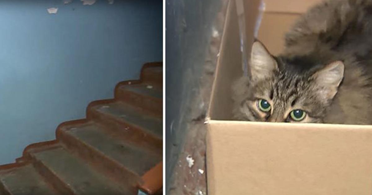 cats pride cat litter