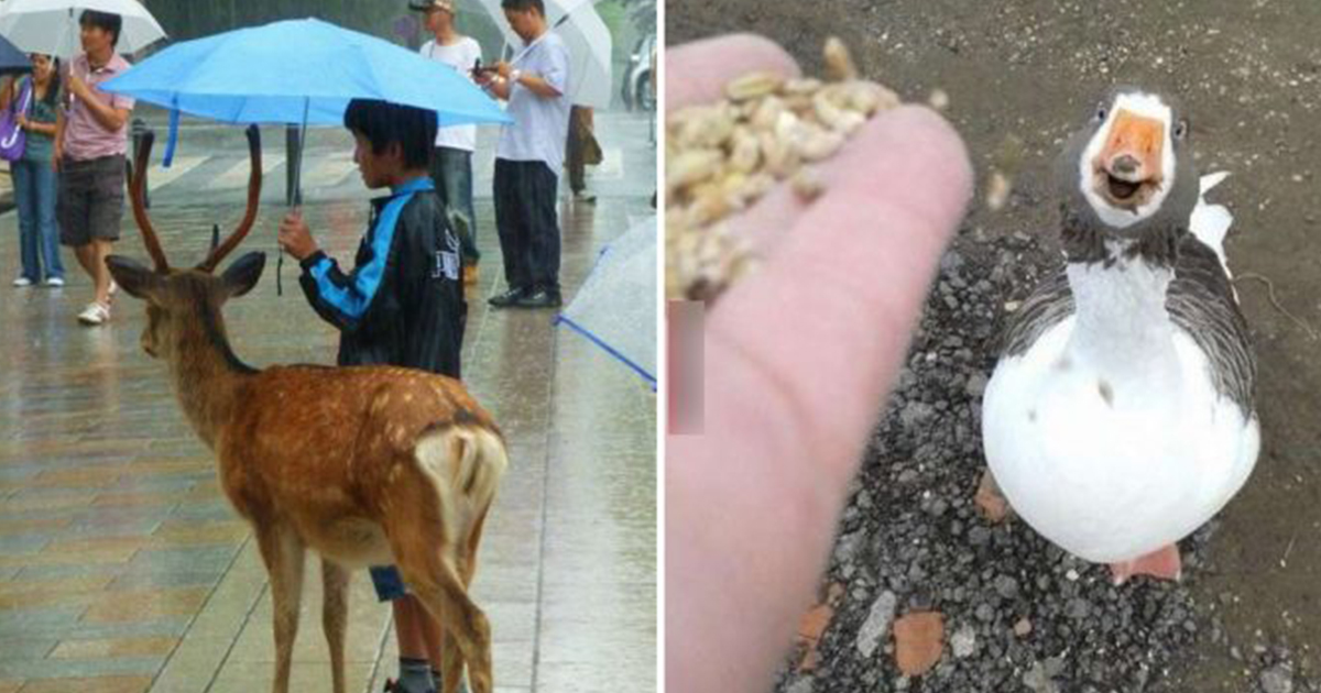 touching moments between animals and humans that show small and