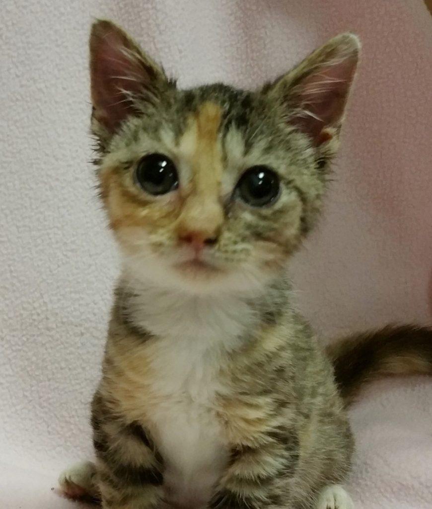 Anak kucing yang ditemukan Susan