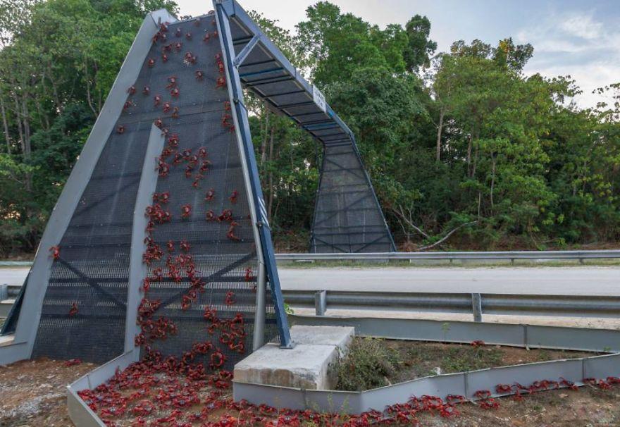 Jembatan khusus penyeberangan hewan