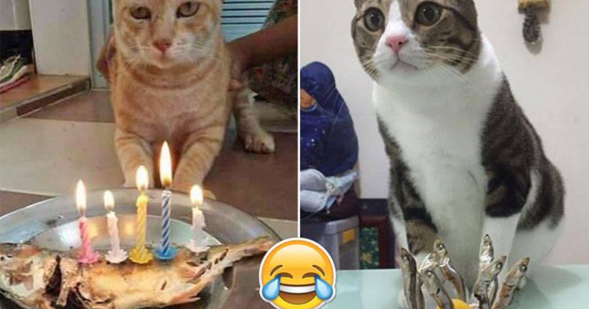 Cats Get Special Birthday Cake On Their Birthday And Their Reactions
