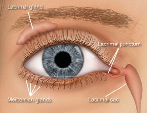 Do you have a tiny hole in the corner of your eyelid? It has