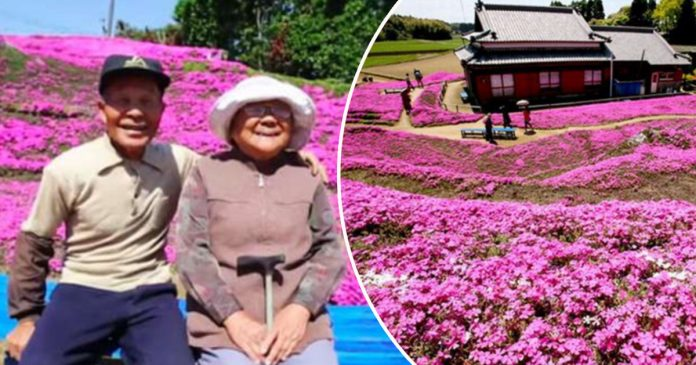 Old man spent 30 years planting flowers for his blind wife