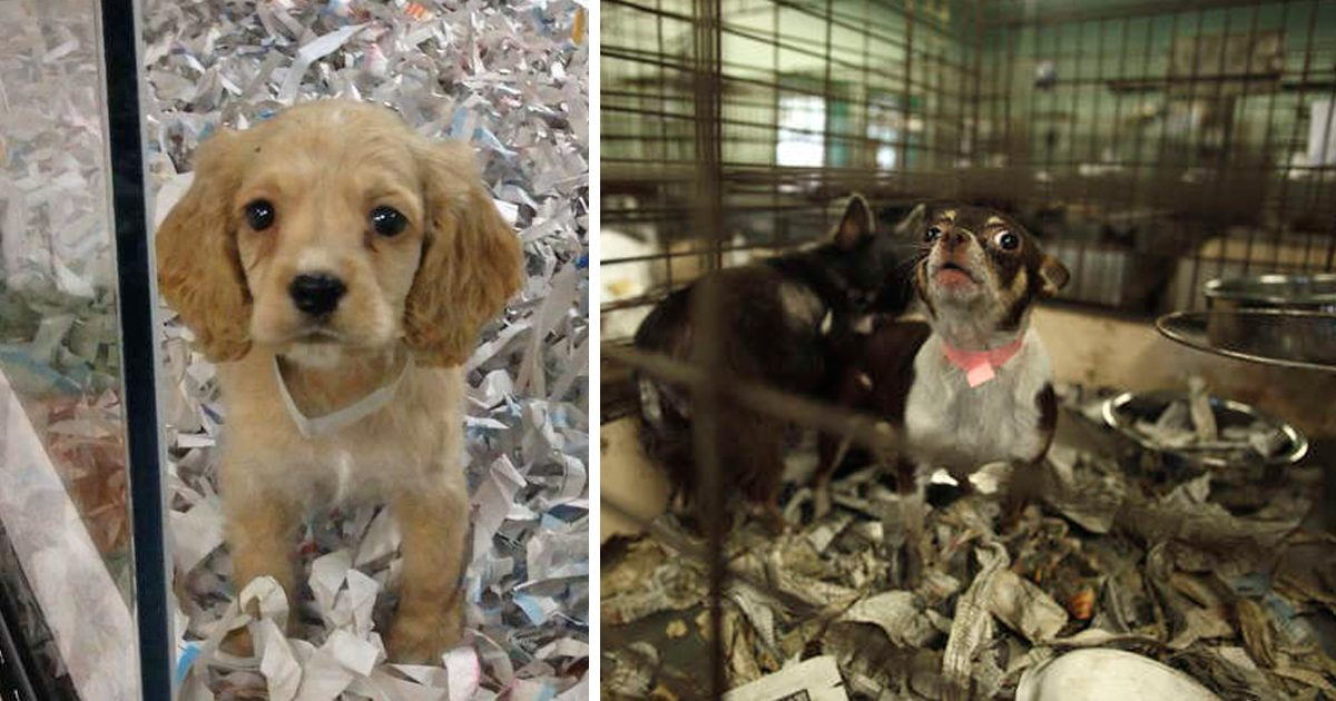 California banned pet stores from selling commercially breed