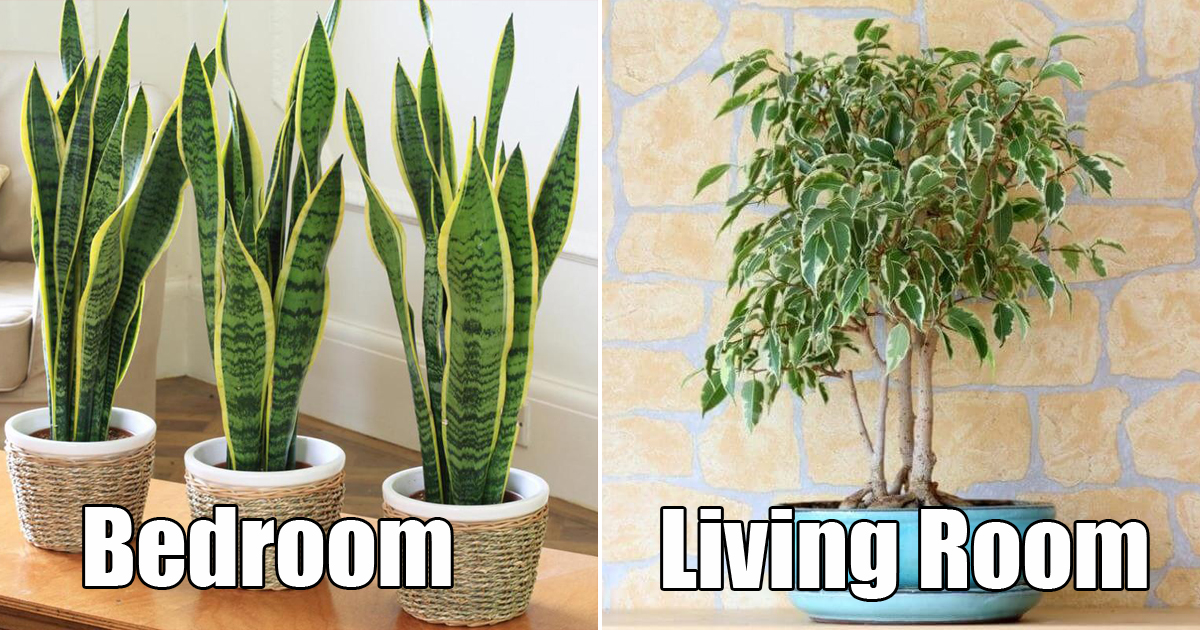 From Bedroom To Bathroom These Are The Perfect Indoor Plants For Your House